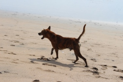 Balinese suns skrien